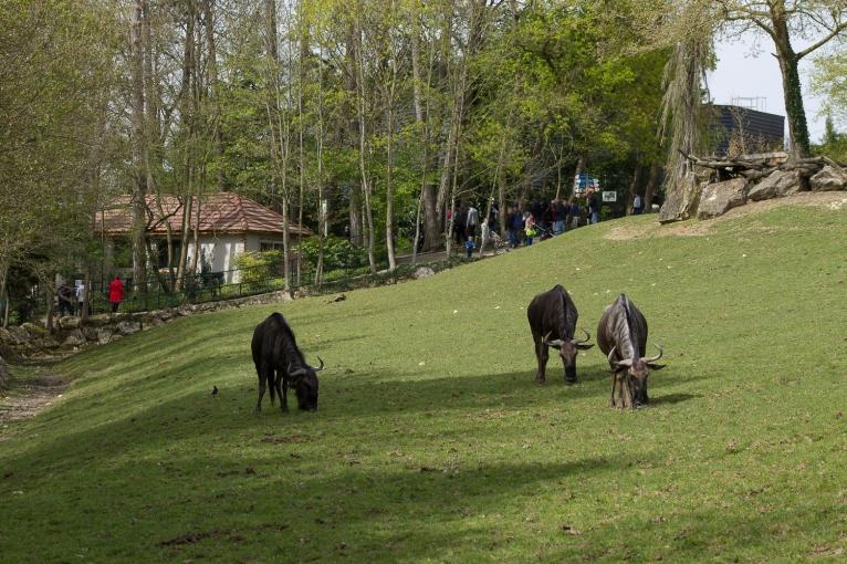 Animals-ZooParc-April-2016-24