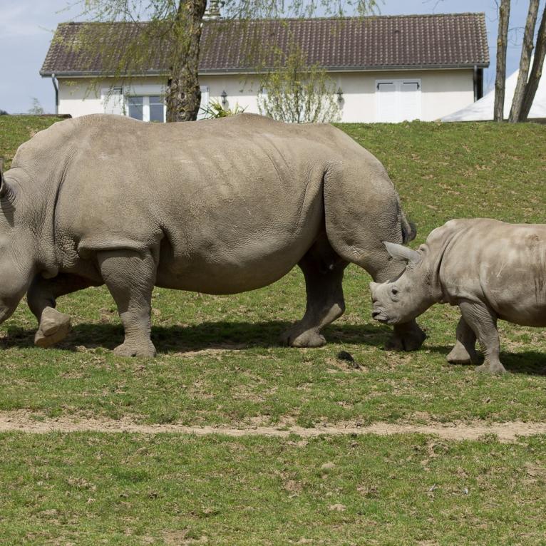 Animals-ZooParc-April-2016-27