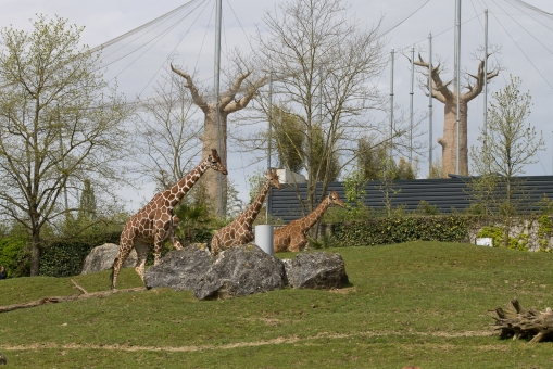 Animals-ZooParc-April-2016-30