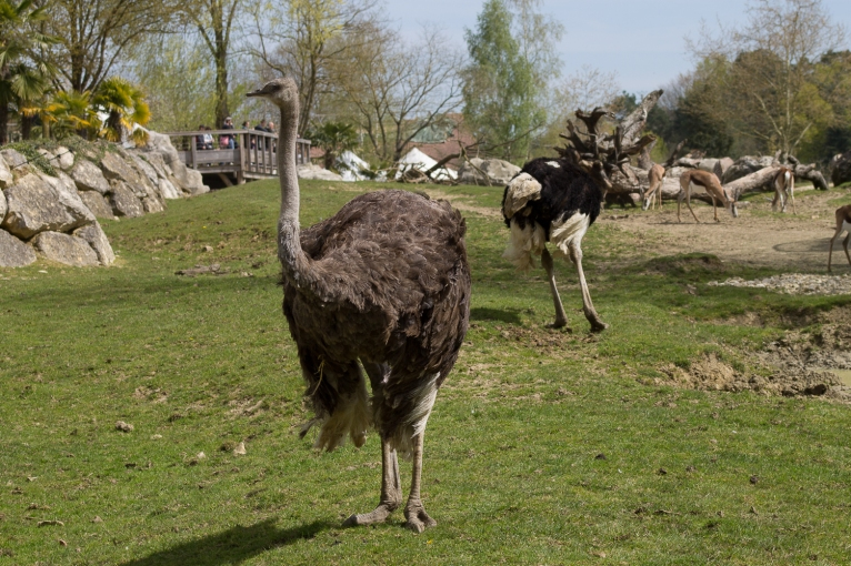 Animals-ZooParc-April-2016-32