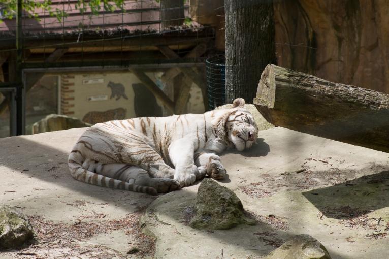 Animals-ZooParc-April-2016-36