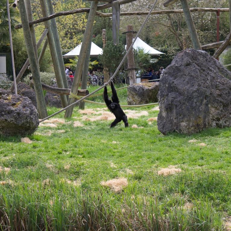 Animals-ZooParc-April-2016-43