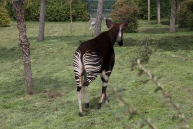 Animals-ZooParc-April-2016-48