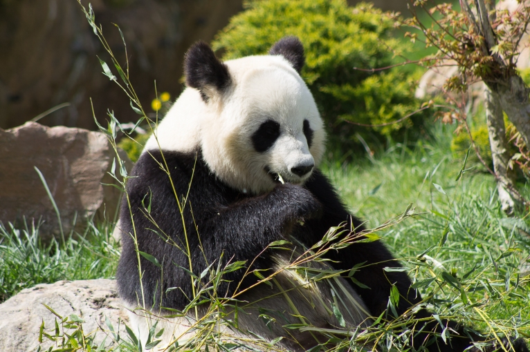 Animals-ZooParc-April-2016-60