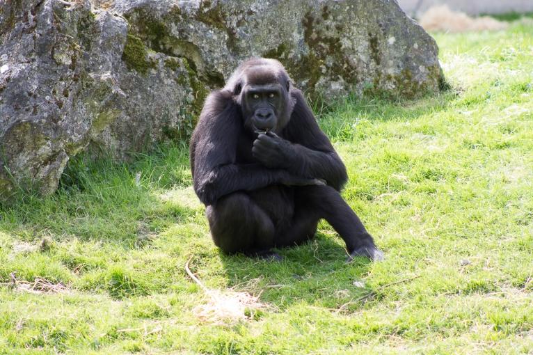 Animals-ZooParc-April-2016-70
