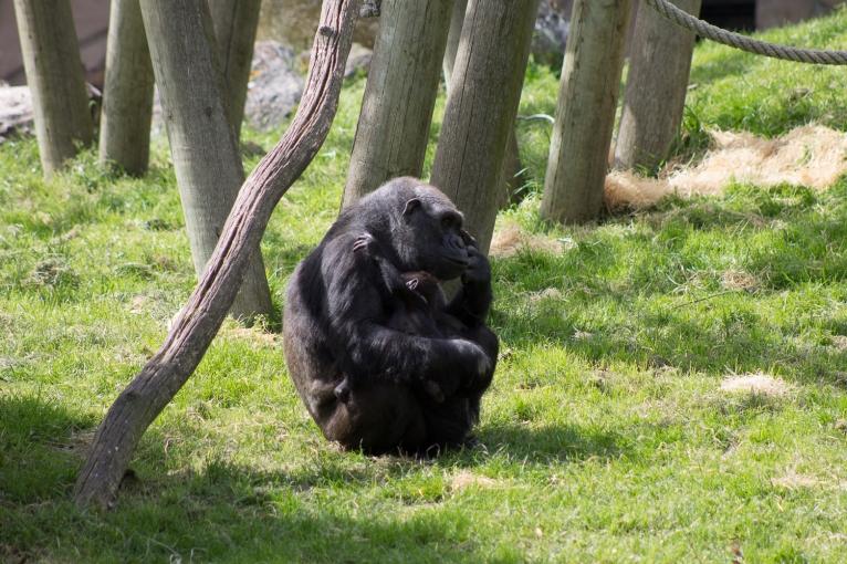 Animals-ZooParc-April-2016-71