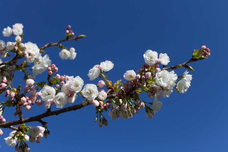 let love blossom